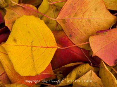 Panorama Prints: Fall