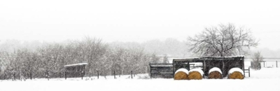Panorama Prints: Winter